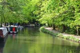 Charity Dog Walk along The Basingstoke Canal with an optional Pub lunch!